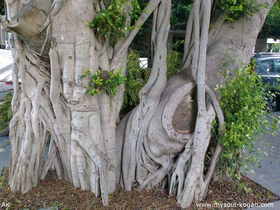Удивительные деревья 1