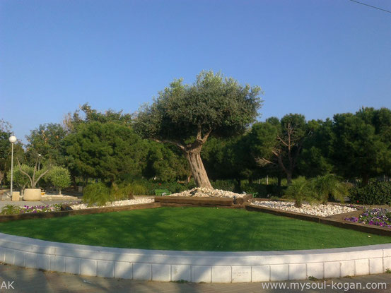 Ашкелон  Ashkelon