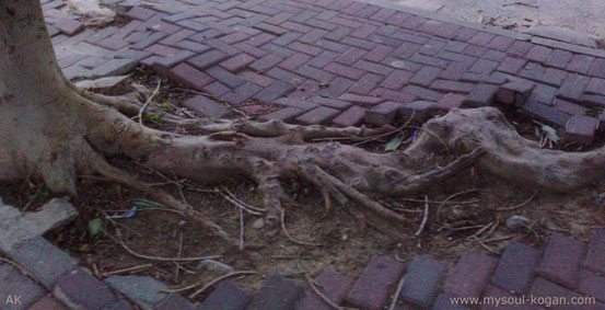 корни