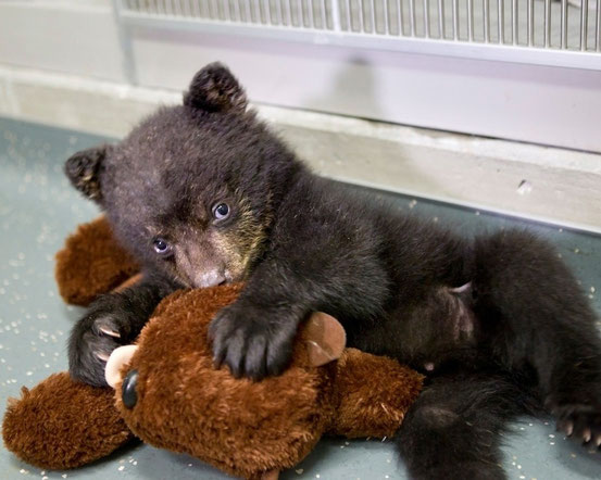 Медвежёнок