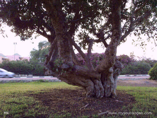 Удивительные деревья 14
