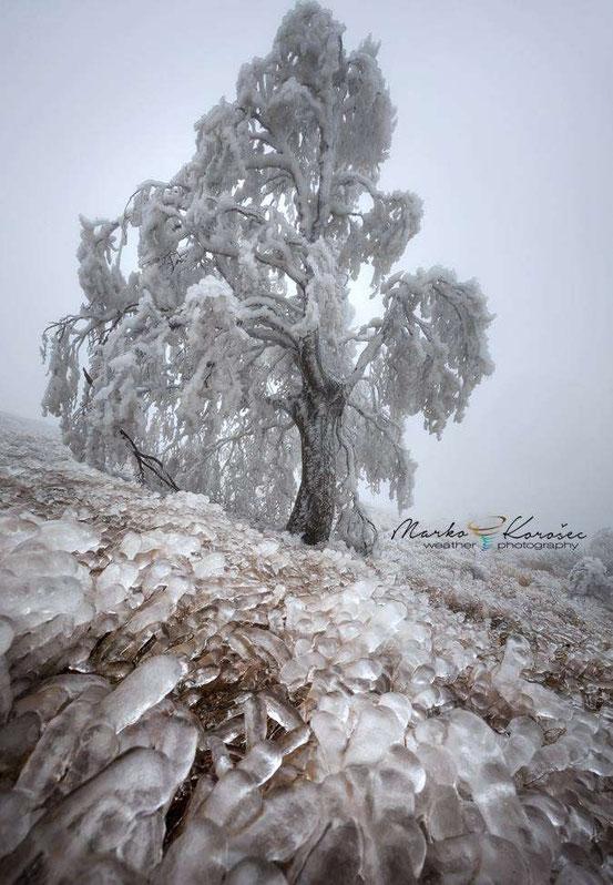 Замёрзшая природа