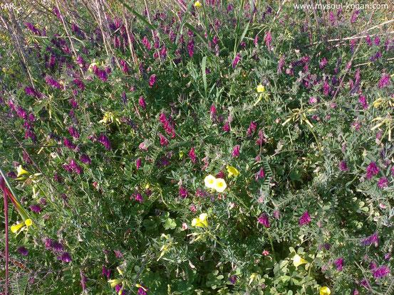 Весна в Израиле