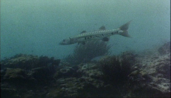 Barracuda de Harry Kerwin - 1977