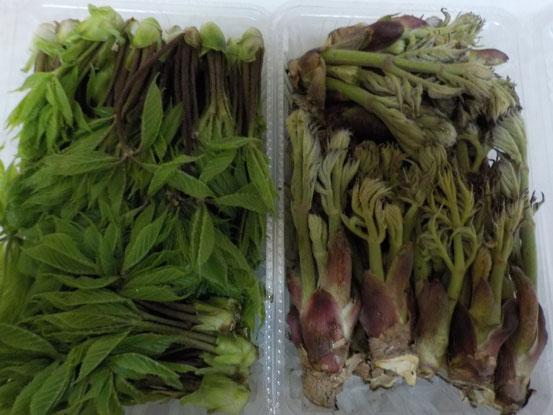 コシアブラとタラの芽