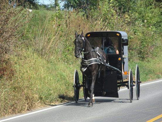 バギーと呼ばれるアーミッシュの馬車