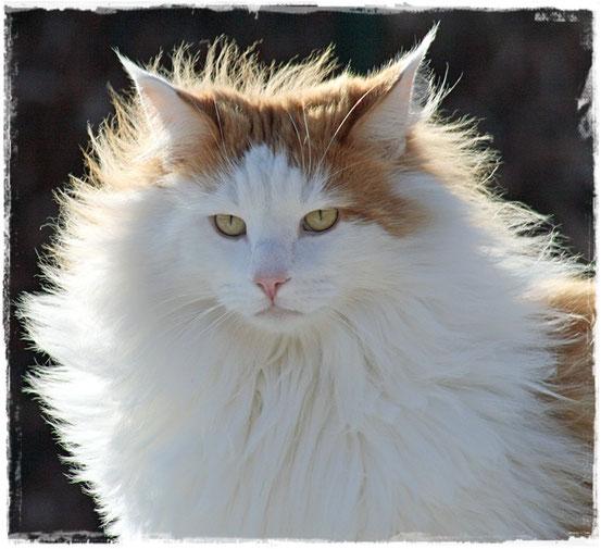 Karlson mit Winterfell