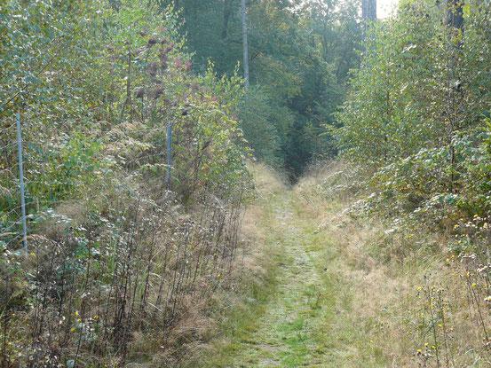 Lumpenstieg nach Ballenstedt. Schmaler, steiler Weg