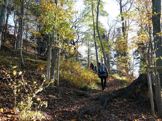 Weg zum Agnesberg, Stempelstelle 31, Harzer Wandernadel