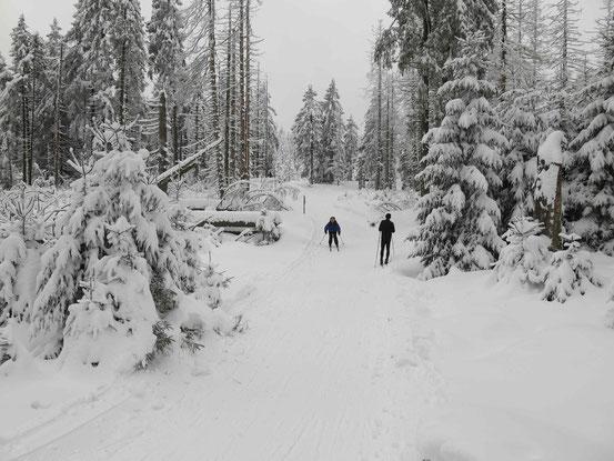 Langlaufen im Harz: Es geht bergab