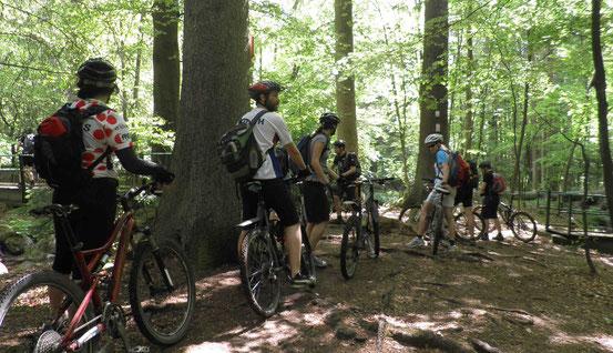Mountainbiker auf einem Pfad bei Schierke