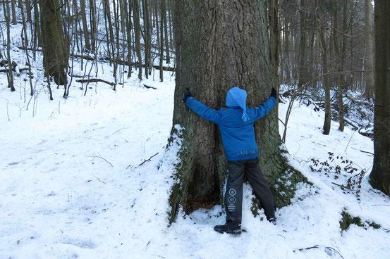 Winterwald: Kind steht an einer Fichte, breitet die Arme aus, um den breiten Stamm zu zeigen