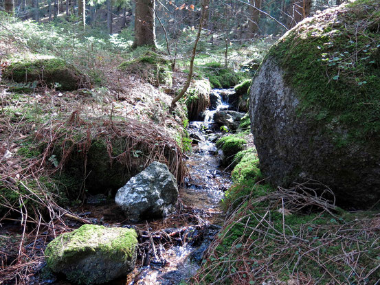 Bach zwischen bemoosten Steinen, Kästeklippentour Harz