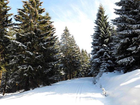 Loipe Harz bei Torfhaus