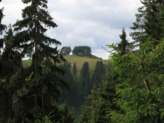Höhenwanderweg Sankt Andreasberg: Blick durch eine Baumlücke auf den südlich gelegenen Galgenberg