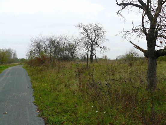 Selketal-Stieg, auf der Strecke von Bad Suderode nach Quedlinburg