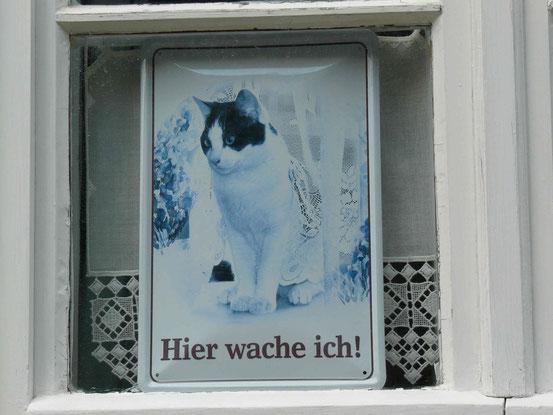"""Katze mit Spitzenvorhang auf """"Hier wache ich!""""-Schild"""
