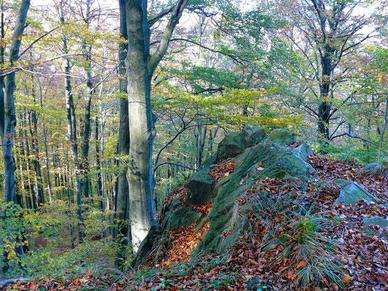 Wanderweg von Bad Harzburg über die Ettersklippe/ Teufelsstieg zum Molkenhaus