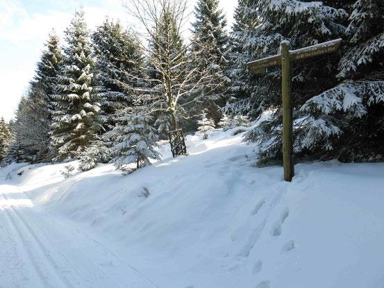 Loipe Harz, Kreuzung Brocken/ Oderteich
