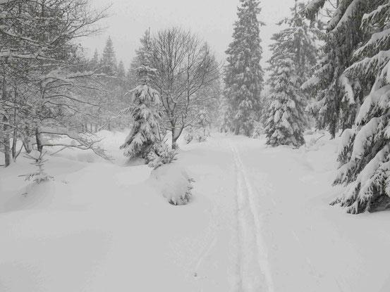 Harz Langlauf Spur