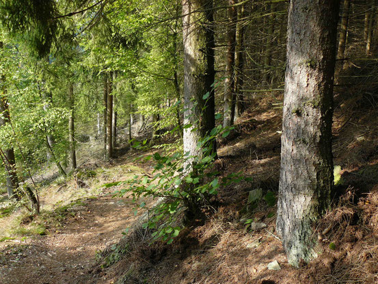 Schmaler Wanderweg von Alexisbad zur Verlobungsurne