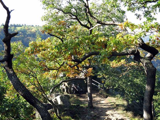Harz-Wanderung ab Hexentanzplatz: Stempelstelle La Viershöhe, Nummer 72, Laubbäume, Geländer zum Aussichtspunkt, abgestelltes Mountainbike