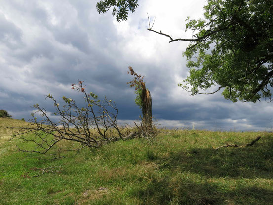 Höhenwanderweg um St. Andreasberg: Kaputter Kaum am Galgenberg, dahinter dunkle Wolken