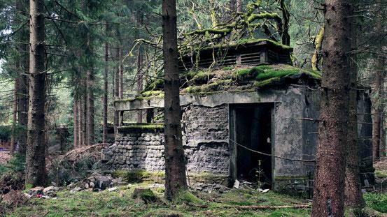 Vergessen im Harz: Foto eines alten überwucherten Bunkers