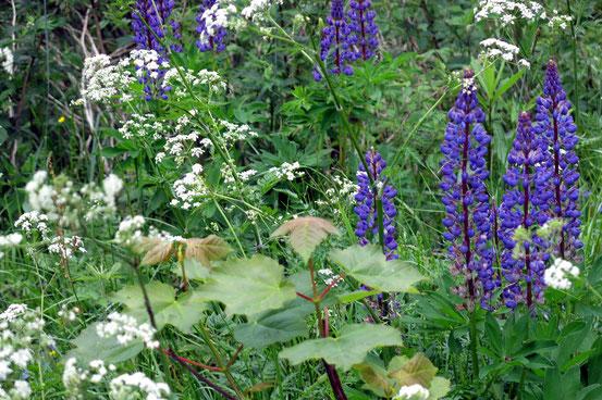 Blüten, Harz, Okerstausee
