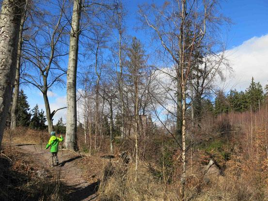 Ilsenburg, Harz, Borkenkäferpfad,