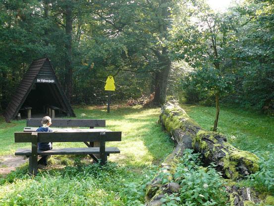 Pausenplatz im Wald mit Bank, Schutzhütte, bemoostem Baumstamm