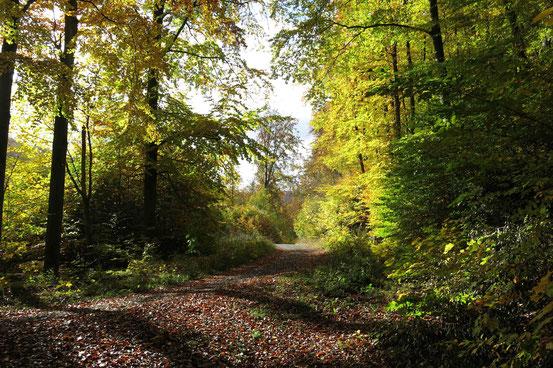 Wanderung Stolberg-Josephskreuz