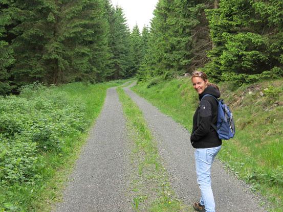 Forstweg, Fichten, Nähe Torfhaus/ Harz