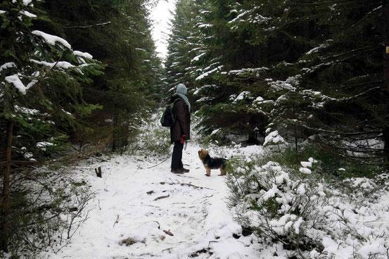 Verschneiter Waldweg auf dem Weg zu den Schnarcherklippen bei Schierke. Frau mit Hund.
