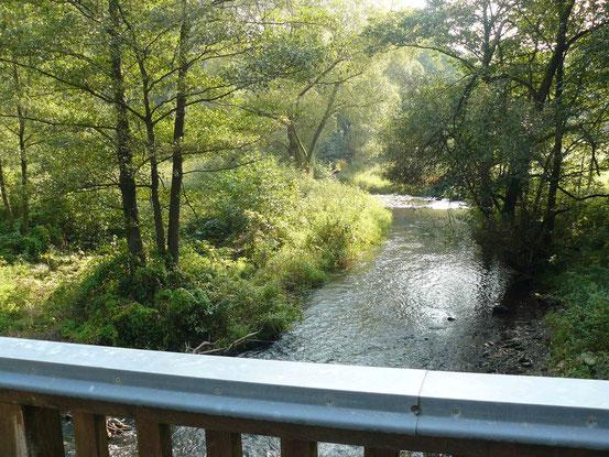 Blick auf die Selke von der Brücke an der Selkemühle aus, rechts und links Bäume