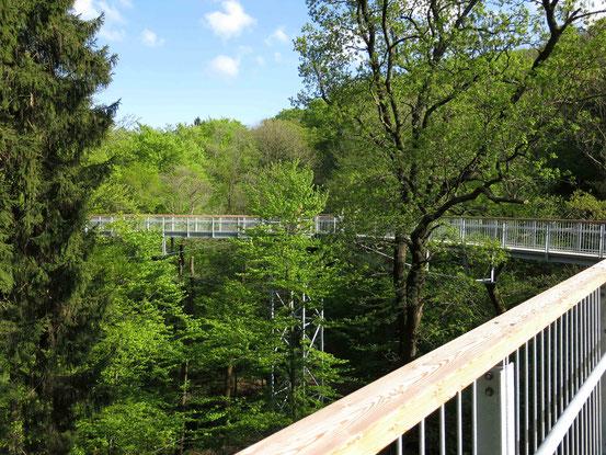 Baumwipfelpfad Bad Harzburg: Holzbeplankter Weg zwischen Bäumen