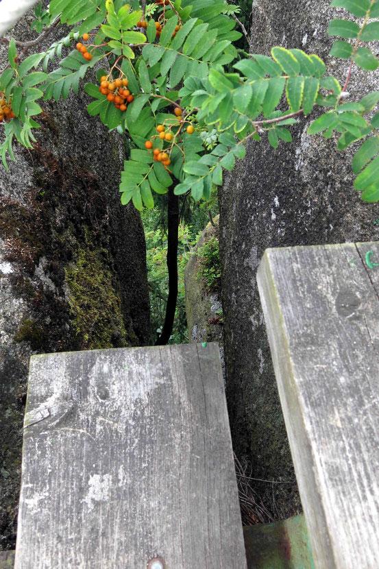 Harz Treppenstein Felsspalt