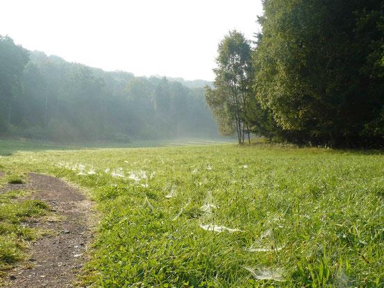 Wiese mit vielen feuchten Spinnweben, Nebel im Hintergrund