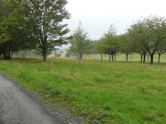 Forststraße von Ballenstedt nach Gernrode, Selketal-Stieg