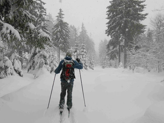 Langlaufen Harz