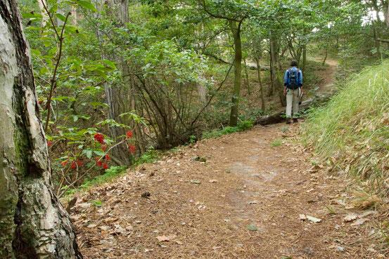 Wanderweg entlang der Teufelsmauer mit Wanderin von hinten und Vogelbeeren im  Bild