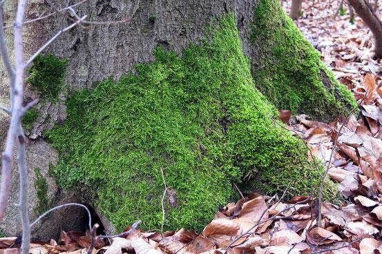 Baum mit Moos