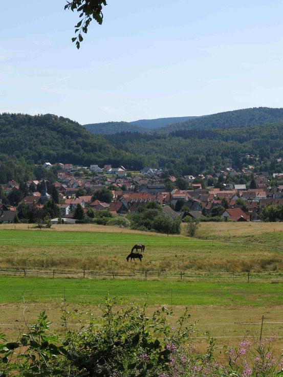 Steinway-Trail: Blick auf Wolfshagen, im Vordergrund Pferde auf der Weide