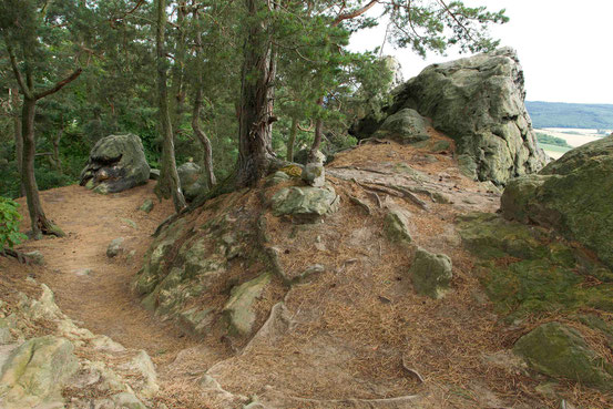 Wanderung Teufelsmauer/ Harz. Wanderweg mit Felsen, Kiefern, Blick auf Felder im Umland