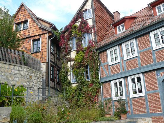 Indian Summer in Quedlinburg. Mit grünen und roten Weinblättern beranktes Haus