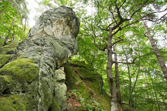 Wanderweg entlang der Teufelsmauer, Harz. Großer Fels mit Moos bedeckt.