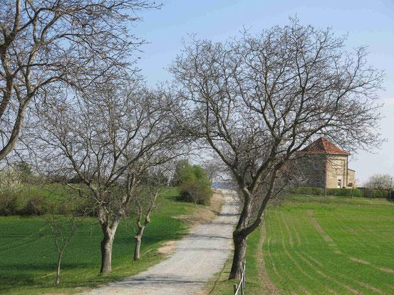 Teufelsmauer, Timmenrode