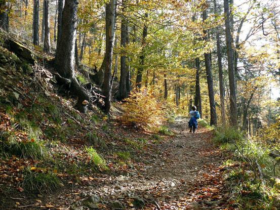 Weg von Bad Harzburg über Ettersklippe zum Molkenhaus