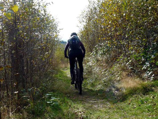Trail bei Bad Harzburg
