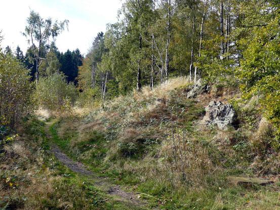 Trail bei Bad Harzburg durch lichten Birkenwald